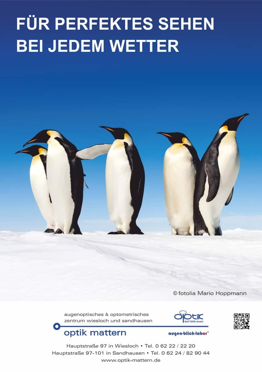 OM Aktuelles Pinguine