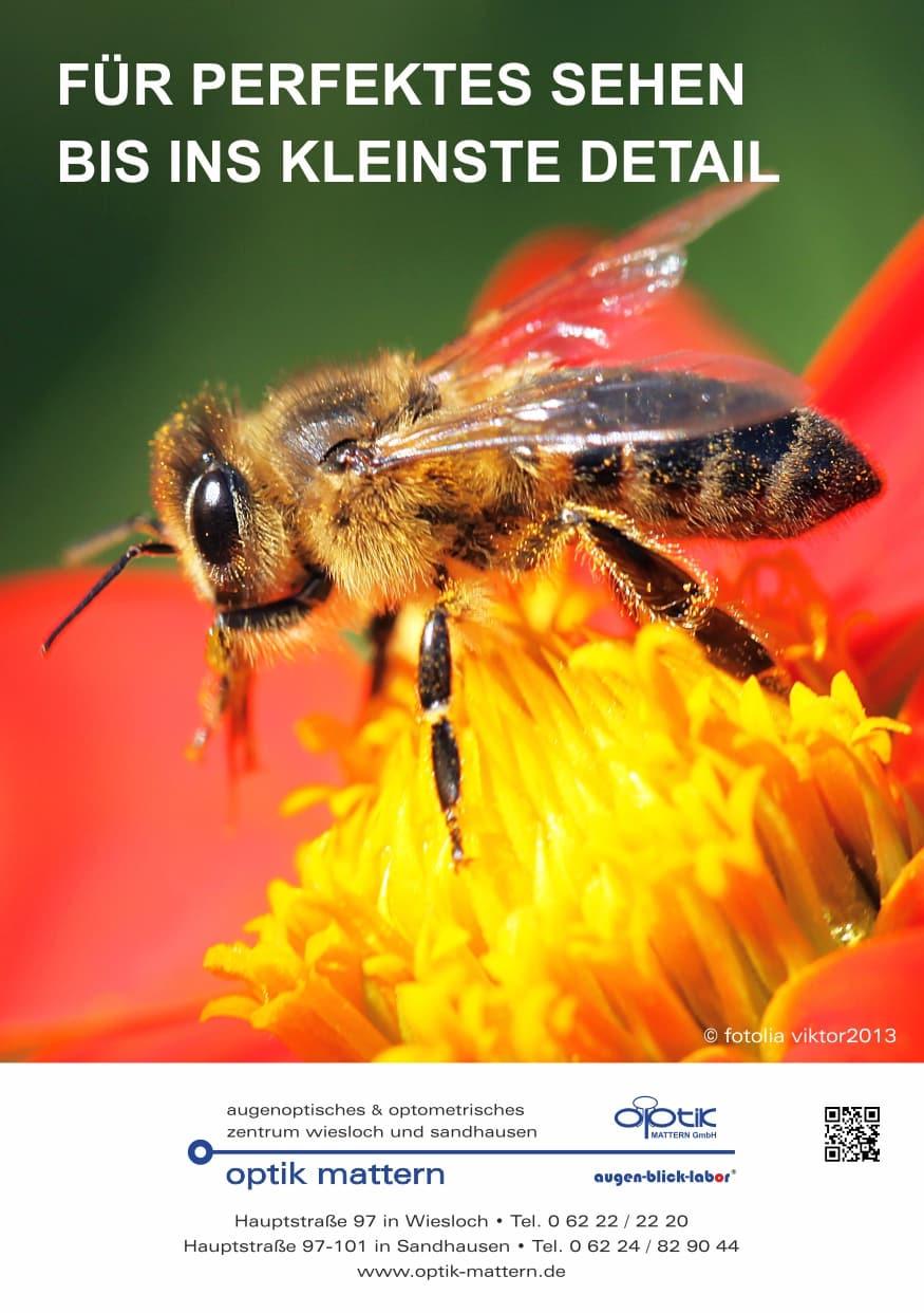 OM Aktuelles Biene